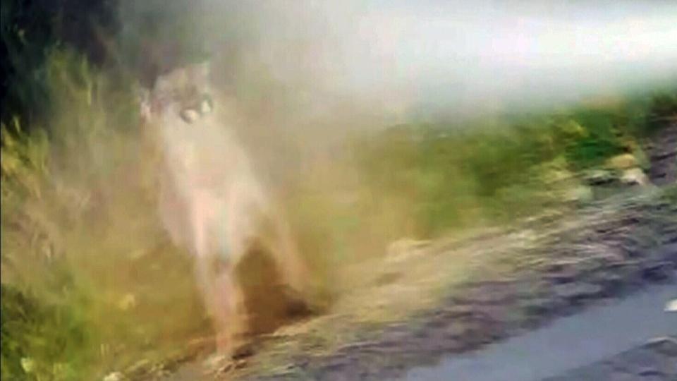 stony run cougar women Bermuda run - east course bermuda run, nc  cougar point kiawah island, sc open: june 6   close: july 10  stoney creek country club whitsett, nc.