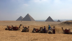 Camels rest between rides with their owners against the backdrop of the pyramids in Giza, Egypt, Aug. 30, 2015. (AP / Courtney Bonnell)