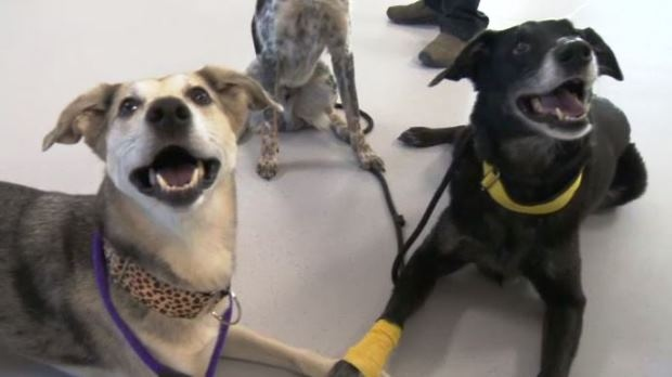About fifty percent of dogs that arrive at the Winnipeg Humane Society need behavioural training before that can be adopted.