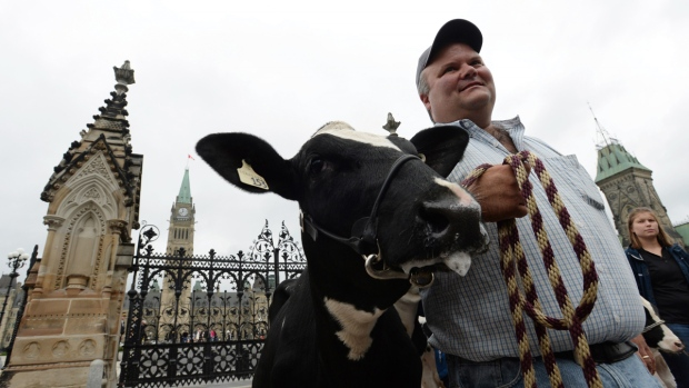 Dairy farmer Robbie Beck of Shawville, Que., holds onto a dairy cow as he takes part in a protest in front of Parliament Hill in Ottawa on Tuesday, September 29, 2015. (Sean Kilpatrick / THE CANADIAN PRESS)