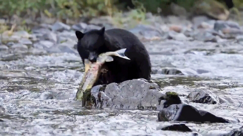 bear sooke