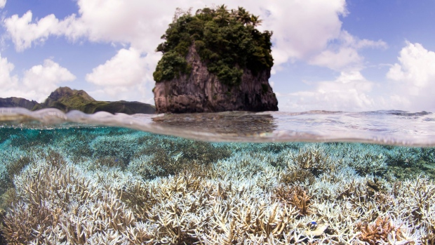 Mass coral bleaching occurring in Great Barrier Reef for 2nd year