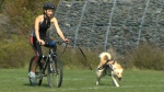 CTV Atlantic: Endurance sports with your dog