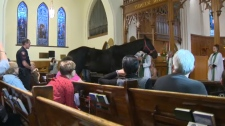 Horse blessing - Cathedral Church of the Redeemer