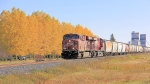 A CP Rail train passes a row of popular trees headed west through Indian Head, Sask. (MyNews / Dan Loran)