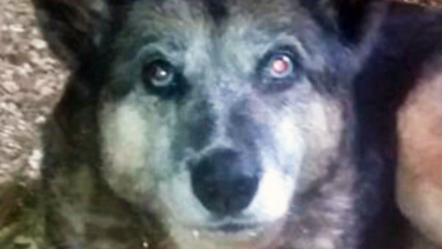 Dog owner outraged