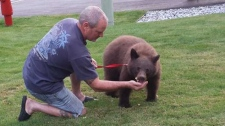 Man leashes bear