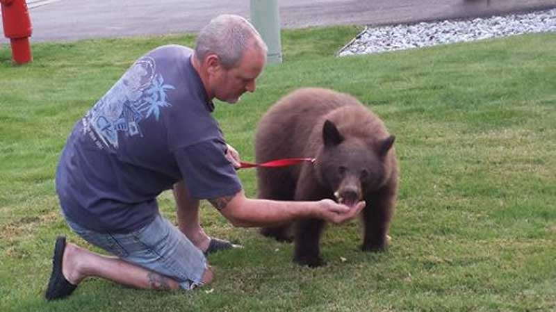 Eric Volpatti said he cared for a sick bear that wandered into his Montrose, B.C. neighbourhood until authorities arrived on Oct. 9, 2015. (Facebook)