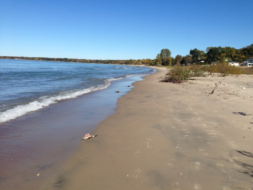 Several dead birds washed up on the shore of Ardmore Beach in Tiny Township on Friday October 23, 2015. (Brandon Rowe / CTV News)