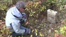Weldon Yates looks at one of the tombstones in an abandoned Glace Bay graveyard.