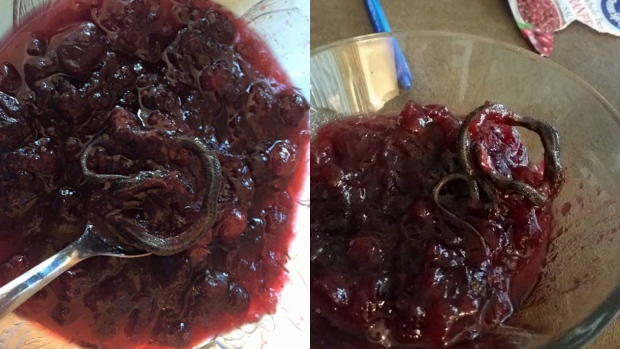 Snake in can of cranberry sauce