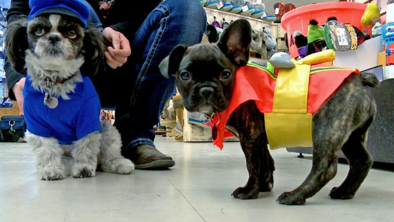 Pets join Halloween fun