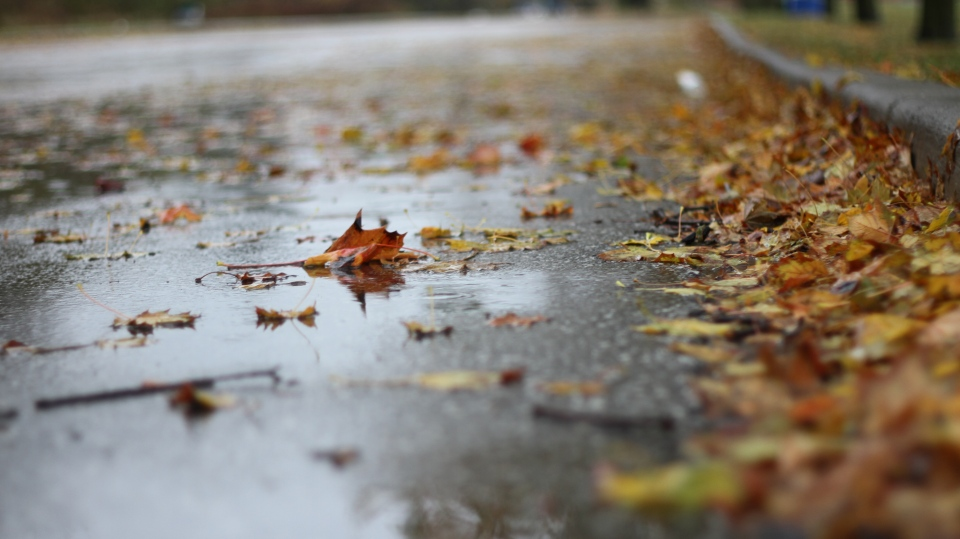 Fall leaves in rain
