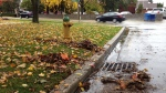 Leaves were cleared from a drain after a fall rain storm in Windsor, Ont., on Wednesday, Oct. 28, 2015. (Chris Campbell / CTV Windsor)