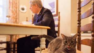 A photo of Prime Minister Stephen Harper eating breakfast next to his cat, Stanley, was tweeted from his official Twitter account.