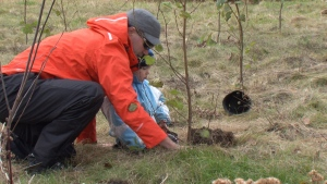 More than 300 small trees and shrubs were planted at the Lovers Creek watershed in Barrie on Saturday, October 31, 2015. (Heather Butts / CTV Barrie)