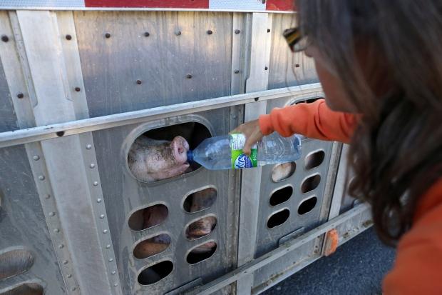 Animal rights activist Anita Krajnc