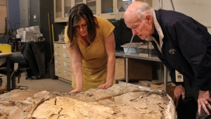 Amanda Cantrell, left, a geoscience collections manager at the New Mexico Museum of Natural History and Science, looks at the museum's latest find with docent Dick Yeck before a public unveiling in Albuquerque, N.M., on Thursday, Nov. 5, 2015. (AP / Susan Montoya Bryan)