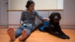 Maya Kaler, 13, who has autism, sits for a photograph with her service dog Pepe, a female chocolate labrador retriever, at her home in Surrey, B.C., on Saturday December 20, 2014. (Darryl Dyck / THE CANADIAN PRESS)