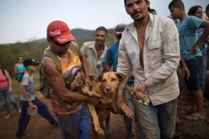 People carry an injured dog they rescued in the small town of Bento Rodrigues, which flooded after a dam burst in Minas Gerais state, Brazil, Saturday, Nov. 7, 2015. (AP/Felipe Dana)