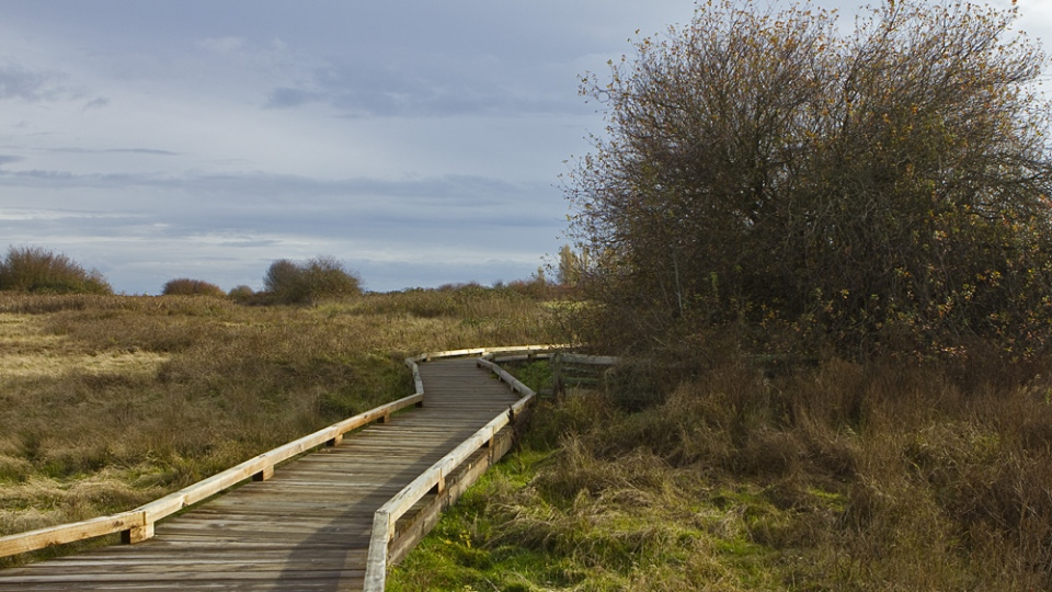 Exploring the trails of Boundary Bay Regional Park (17).jpg