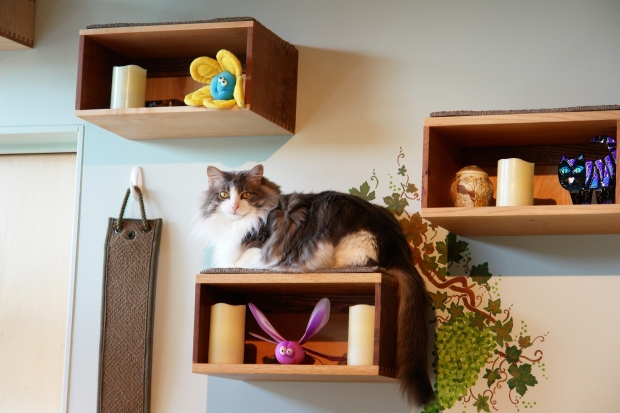 Catify to satisfy: New book offers tips on how to create a cat ... on cat staircase design, cat condo from old dresser, cat house home design, cat room house design, cat chair, cat stairs, cat from home, cat wall walks designs, copy cat chic nursery room design, cat bathroom accessories, cat interior design, cats in the kitchen design, cat shelves,