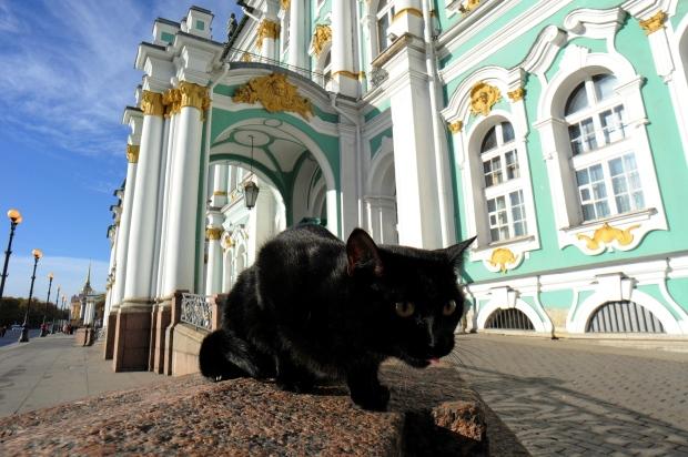 Resultado de imagem para hermitage cats