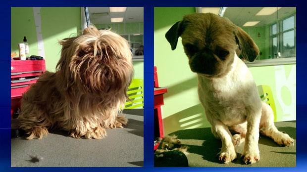 Surrendered dog - Dog breeder - SPCA