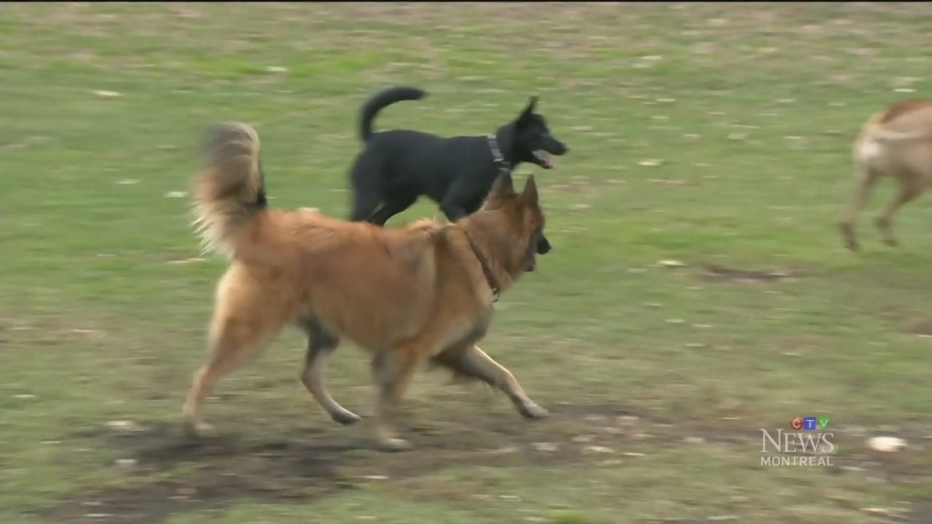CTV Montreal: Dog owners ticketed