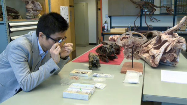 University of Calgary researcher Kohei Tanaka had discovered variances in dinosaur egg fragments