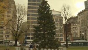 Tree For Boston
