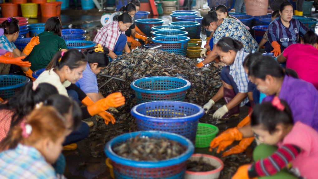 Shrimp processed by child labour