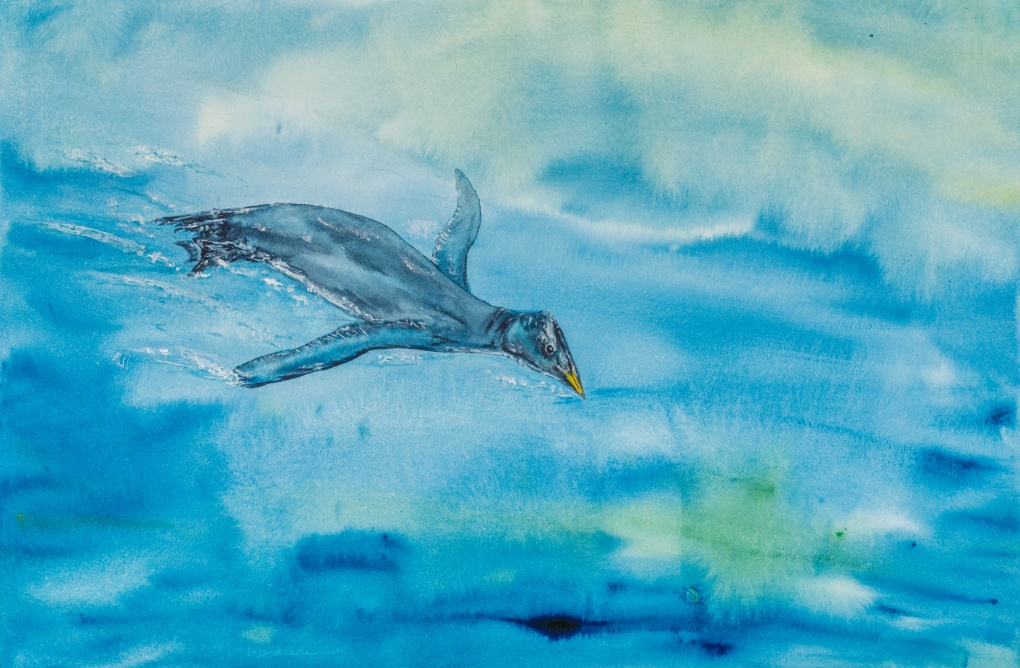 stemec suntokum bird fossil