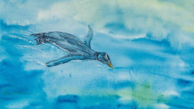 Ancient flightless bird discovered near Sooke