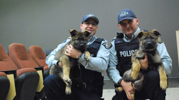 RCMP in Nova Scotia will be posting photos, videos and text online to document the progress of their latest recruits: two, 10-week-old German shepherd puppies. (@RCMPNS / Twitter)