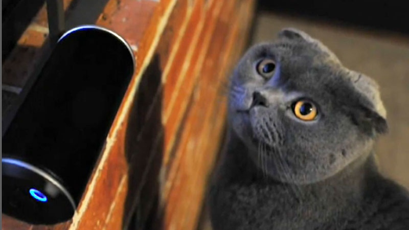 Bacon the cat listens to Music for Cats.