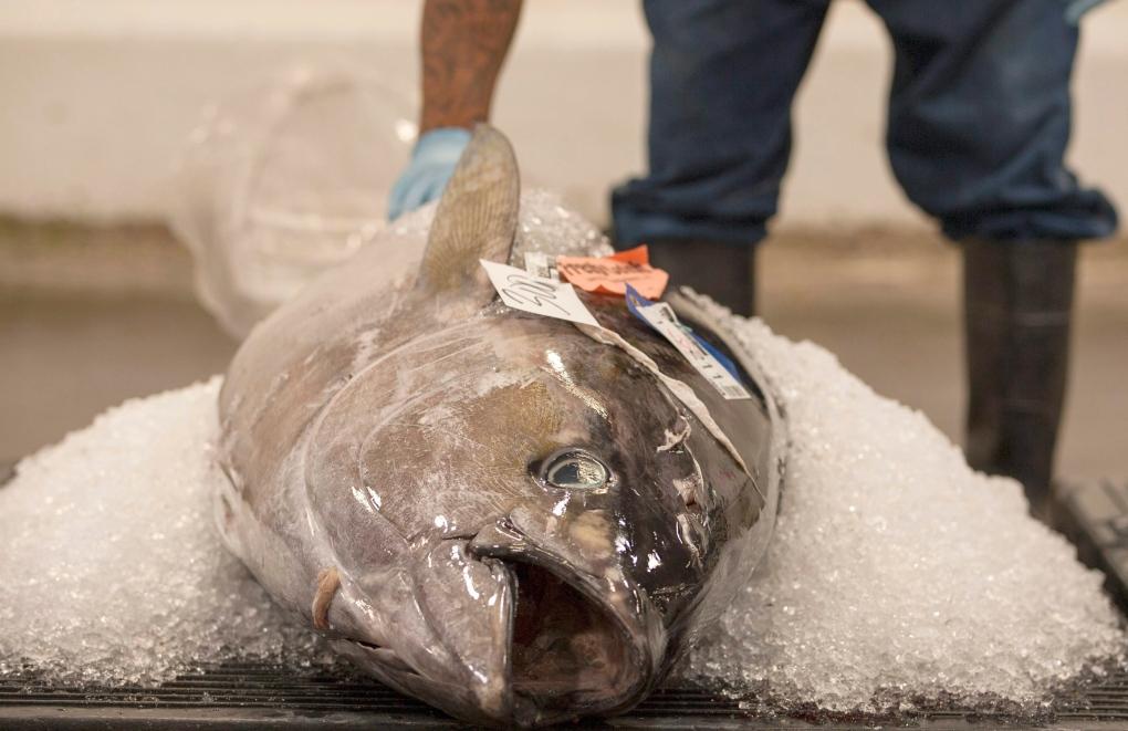 Ahi tuna in Honolulu