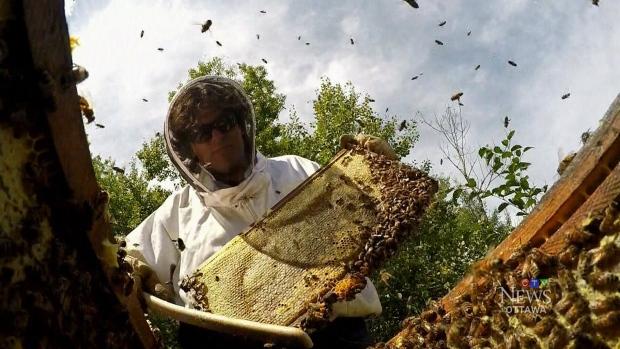 Beehive stolen