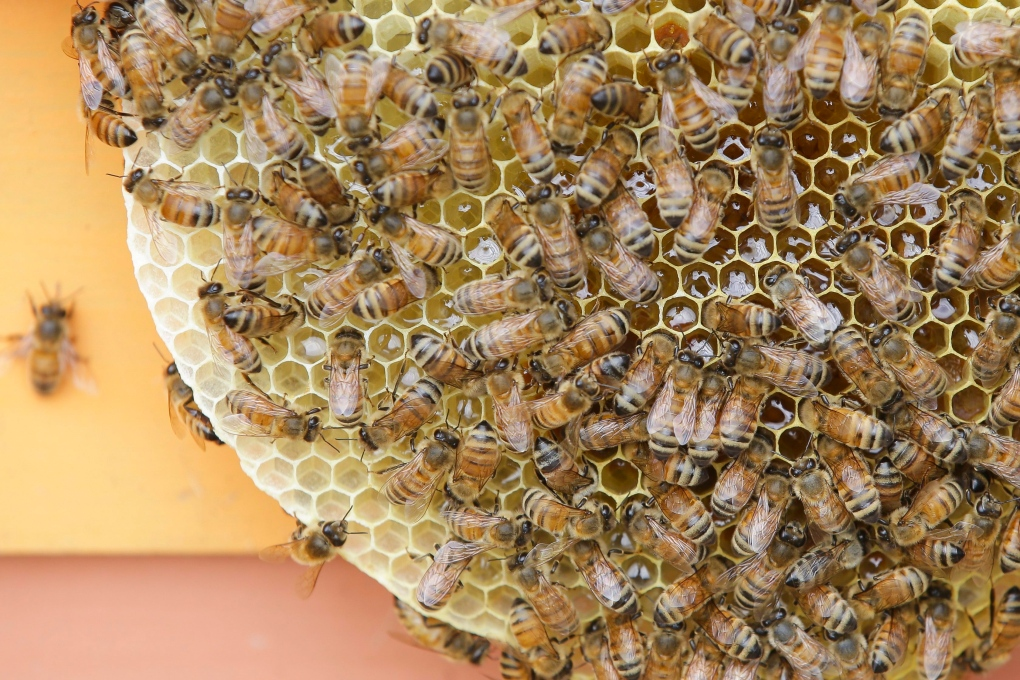 North Bay beekeeper earns bragging rights