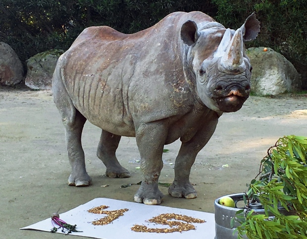 Elly the rhinoceros turns 45