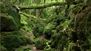Puzzlewood, England (The Wye Valley and Forest of Dean Tourism Association)