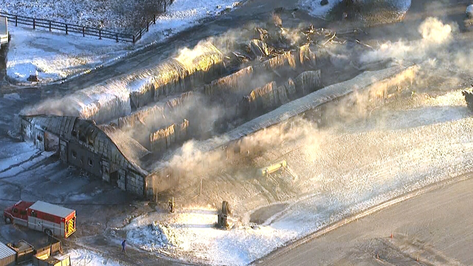 Dozens of horses perish in Puslinch barn fire | CTV News
