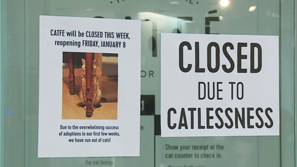 Vancouver-based Catfe temporarily shut down after running out of adoptable cats.