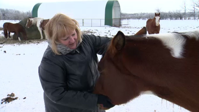 Darlene Dolinski has operated a horse farm in rural St. Norbert for 20 years. She worries her business and way of life is in jeopardy because of the $400 million highway project.