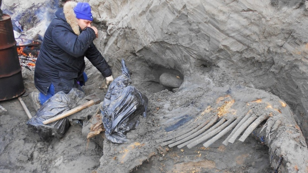Mammoth remains in Siberia