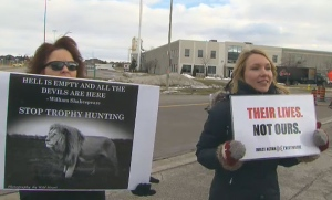 Roughly two dozen demonstrators stopped traffic outside a convention centre in Vaughan, Ont., on Saturday to protest an African trophy-hunting show.
