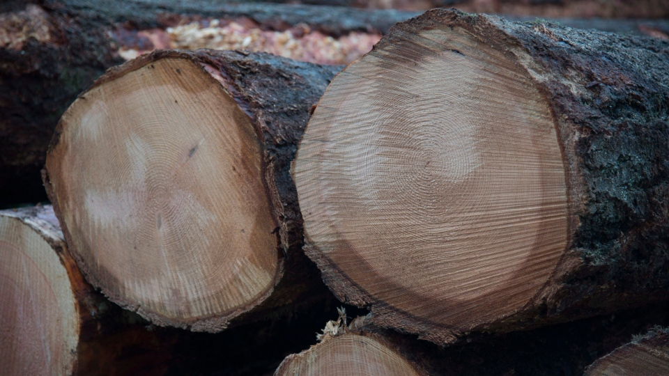 Fresh cut logs are stacked after being harvested by loggers near Youbou, B.C. Wednesday, Jan. 14, 2015. (Jonathan Hayward / THE CANADIAN PRESS)