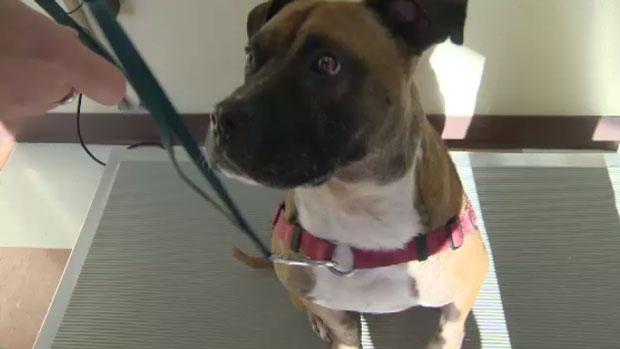 Dog Rescues Preston