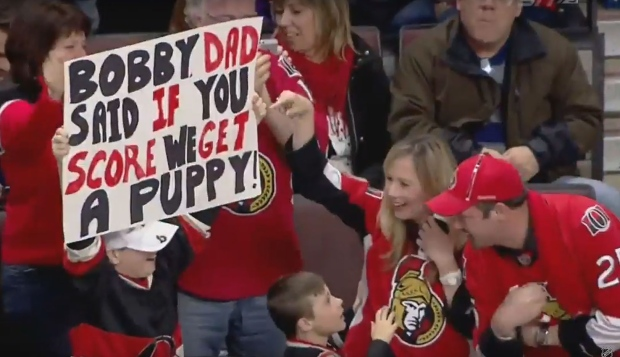 Bobby ryan puppy