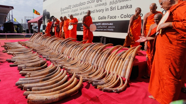 African ivory in Colombo, Sri Lanka